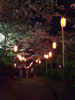 Sakura004
